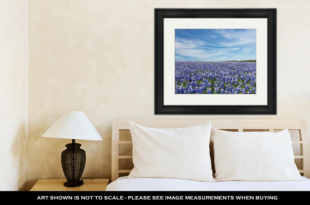 Framed Print, Large Texas Bluebonnet Field Muleshoe Bend Recreation Areaustin