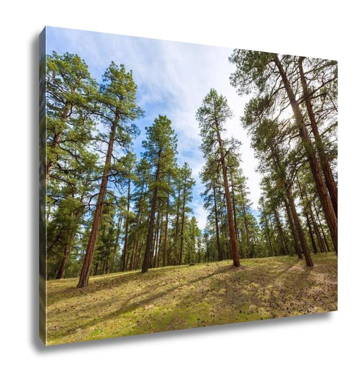 Gallery Wrapped Canvas, Pine Tree Forest In Grand Canyon Arizona