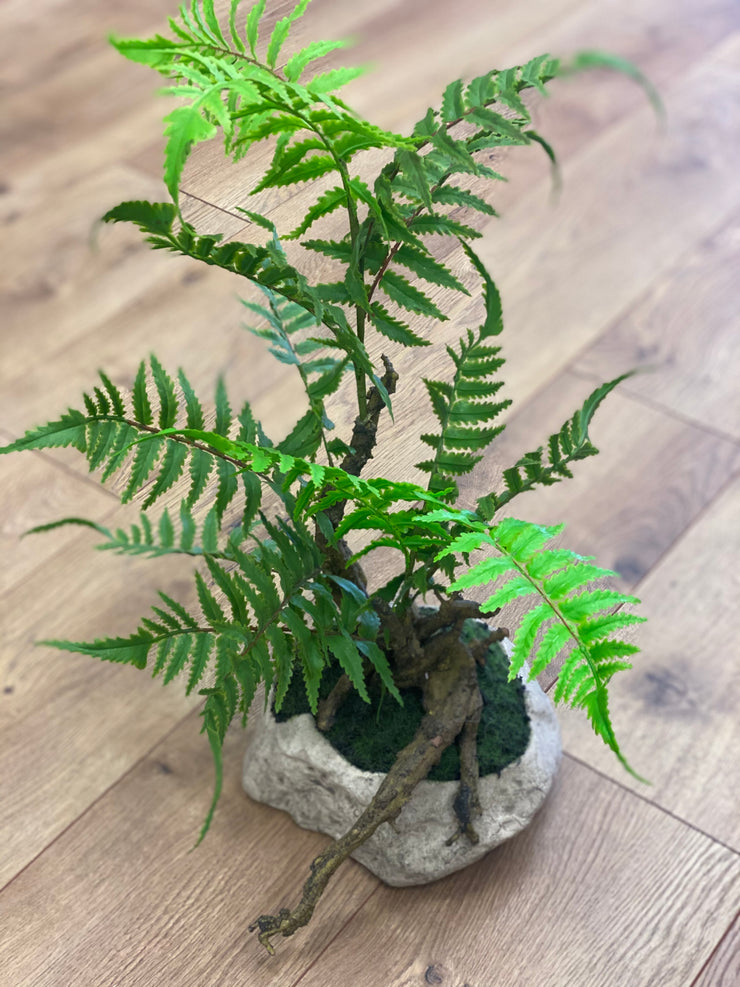 Fern and Moss Plant