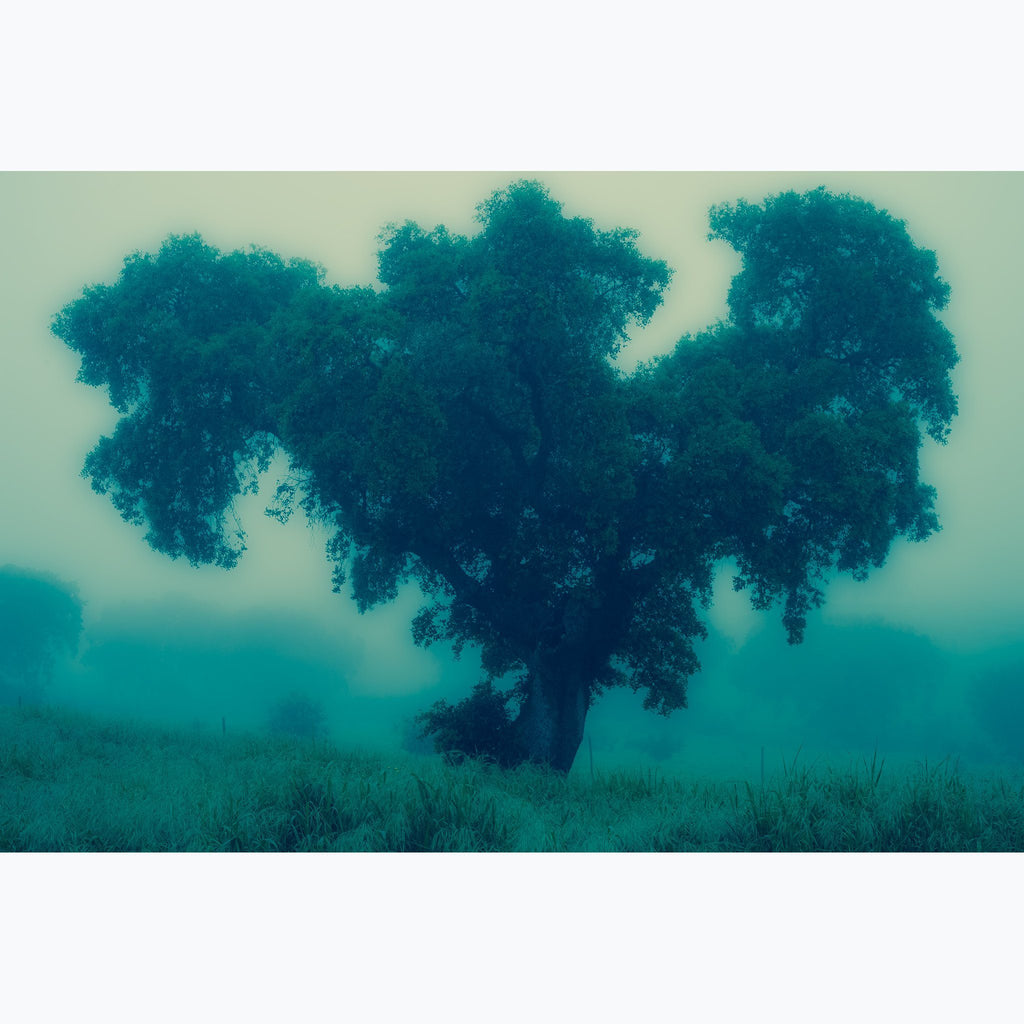 Blue Tree, mist, fog, morning, landscape, Portugal, archival print