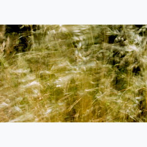 Grasses in the Breeze, gold, breeze, France.