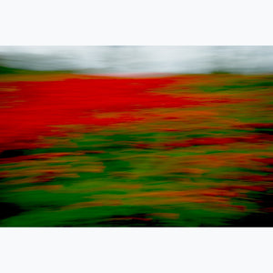 Poppy Field, color photograph, France, red, green, motion
