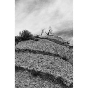 Tree Above, 35mm, b&w photo, barren tree atop cliff lined with ridges