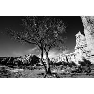 "Tree at Plaza Blanca: Winter, 35mm (30""x45"", 24""x36"", 16""x24"") - Norlynne Coar Fine Art"
