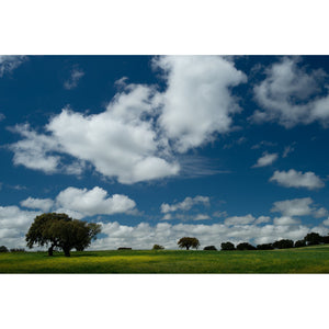 Trees and Clouds, cork oaks on a low horizon below a bright blue sky with white fluffy clouds