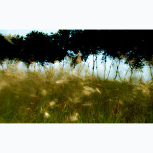 Trees and Grasses, field, breeze, France, spring