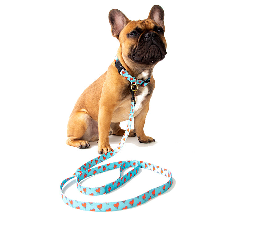 French Bulldog wearing blue and red melting hearts leash and collar set | Trill Paws