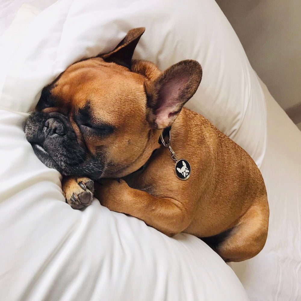 Frenchie Tag