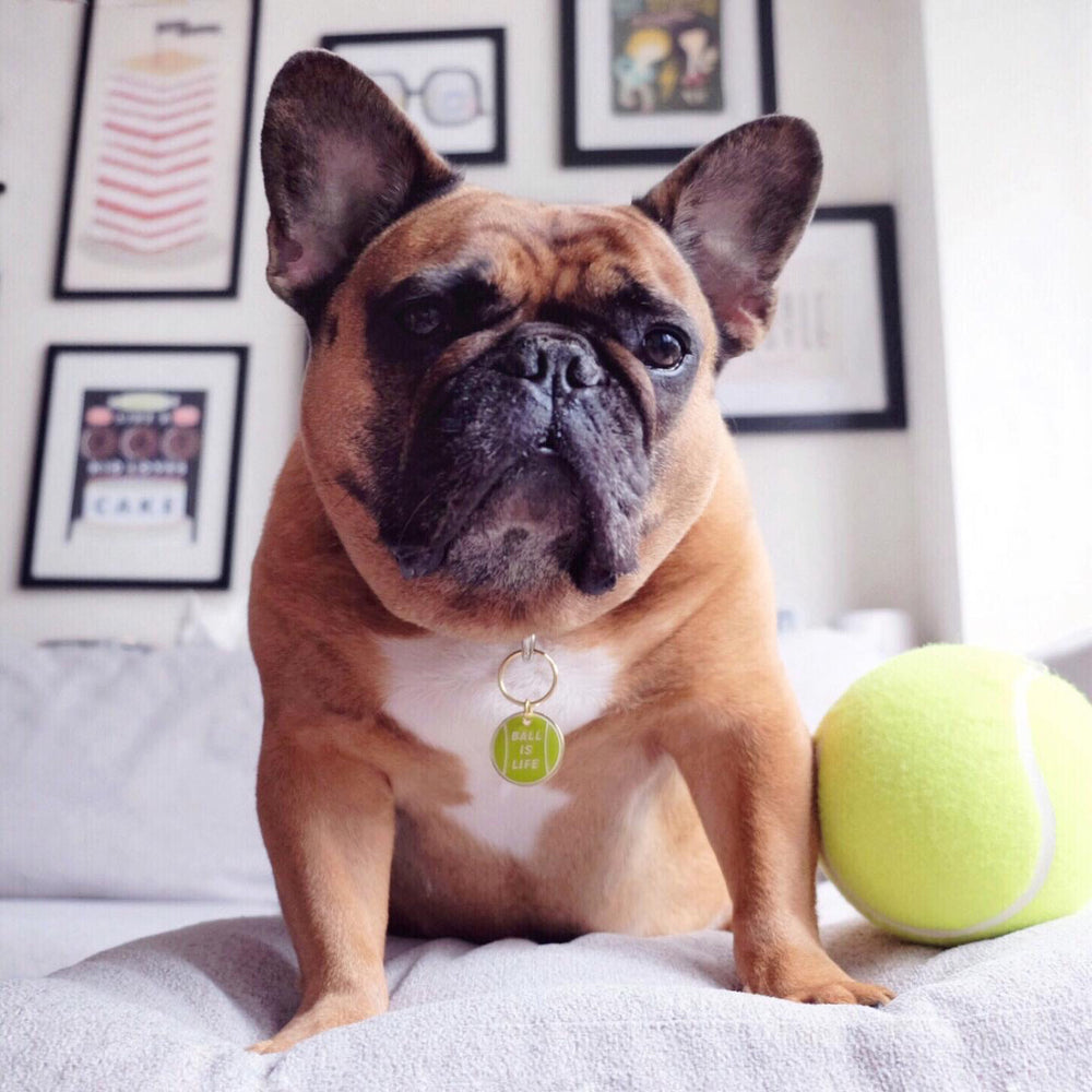 French Bulldog wearing Ball is Life green and gold enamel pet id tag | Trill Paws