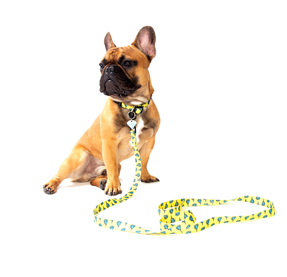French Bulldog wearing yellow and blue diamond drip collar and leash set | Trill Paws