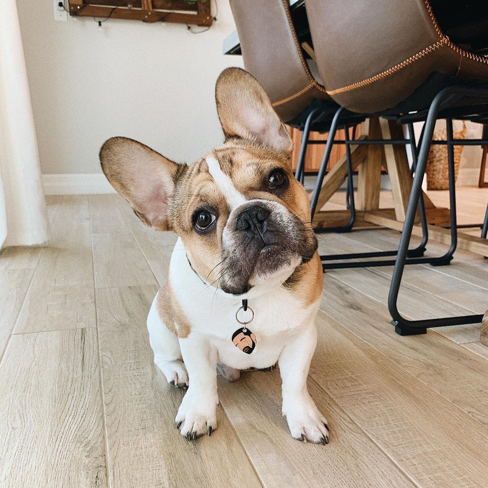 French Bulldog wearing OVO Tears Pet ID Tag | Trill Paws