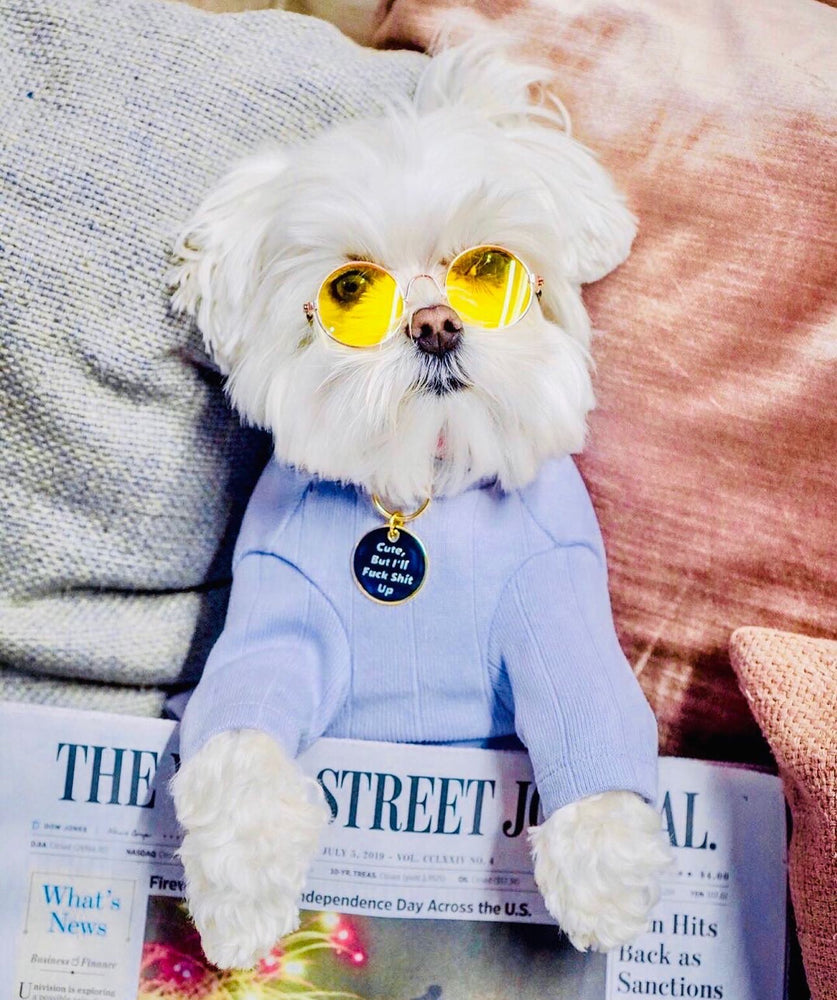 Maltese Dog wearing blue shirt | Trill Paws