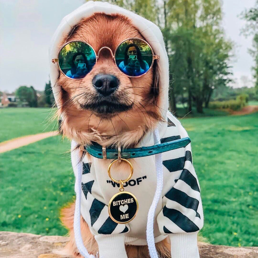 Bitches Love Me Pet ID Tag on brown dog wearing sunglasses and hoodie | Trill Paws