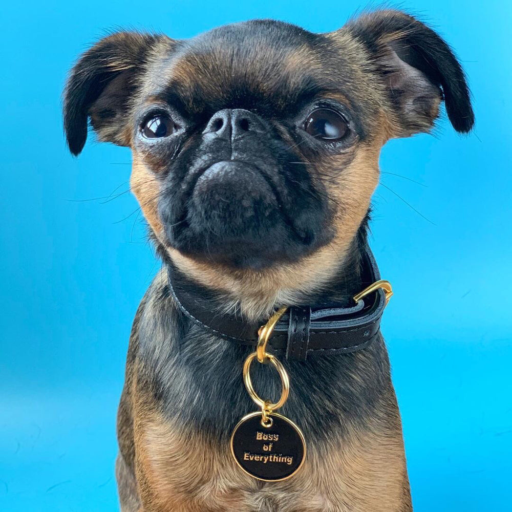 Black and brown dog wearing Boss of Everything black and gold pet id tag in front of blue backdrop | Trill Paws