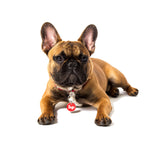 Sup red and white enamel pet ID tag on fawn French Bulldog | Trill Paws