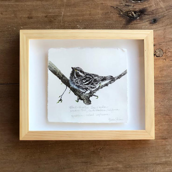 "BLACK THROATED GREY WARBLER 8"" X 10"""
