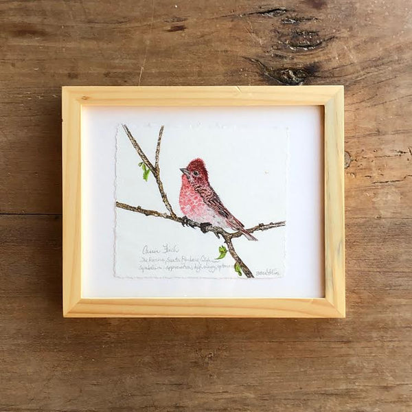 "CASSIS FINCH ""8"" X 10"""
