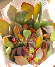 Succulent Leave Temptation