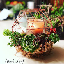 Succulent candle holder