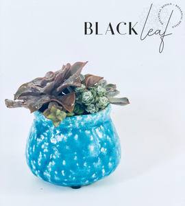 turquoise succulent Alfred bowl