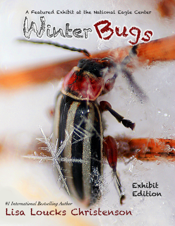 Winter Bugs! Exhibit Edition by Lisa Loucks Christenson
