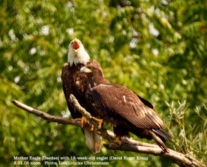 Mother Eagle with Her Immature