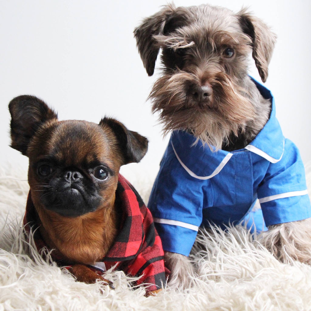 The 10 Best of Designer Brands of Dog Apparel Available Online