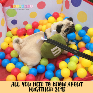 All You Need To Know About Pug-a-Thon 2018