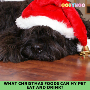 labradoodle wearing a christmas hat, dog dressed as santa paws, what christmas food can my pet eat and drink