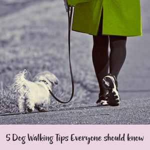 5 Dog Walking Tips Everyone Should Know