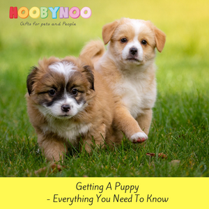 Getting A Puppy - Everything You Need To Know