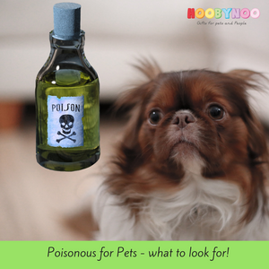 Poison For Pets: The Most Dangerous Things To Watch Out For