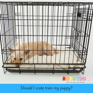 Should I Crate Train My Puppy?