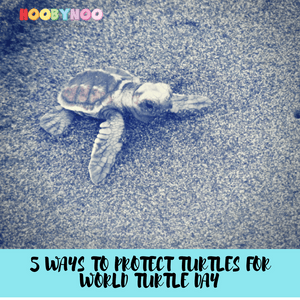 5 Ways to Protect Turtles for World Turtle Day