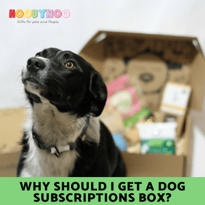 Why Should I Get a Dog Subscription Box?