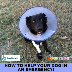 How to Help your Dog in an Emergency