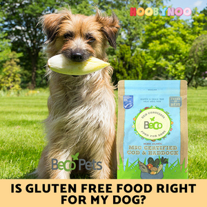 is gluten free food right for my dog? Dog sitting on grass next to Beco pet's food
