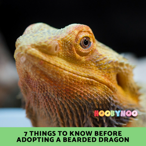 7 Important things to Know before adopting a Bearded Dragon