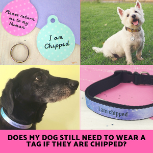 Does my Dog still need to wear a Tag if they are Chipped?