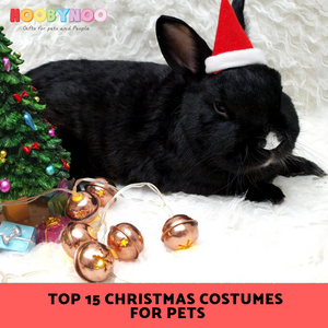 Rabbit sitting under a christmas tree with a hat, what christmas costume could my pet wear