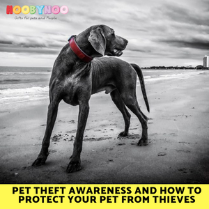 Pet Theft Awareness and How To Protect Your Pet From Thieves