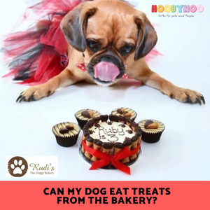 Can my Dog Eat Treats from the Bakery? - Celebrating National Dog Biscuit Day
