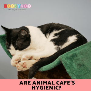 Are Cat Cafes Hygienic?