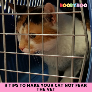 5 Tips to Stop Your Cat Fearing the Vet