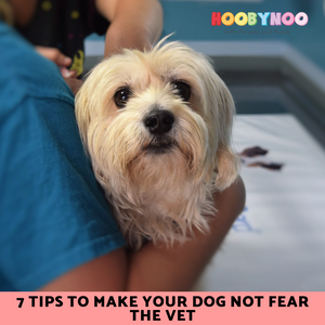 Tips to make your Dog Not Fear the Vet
