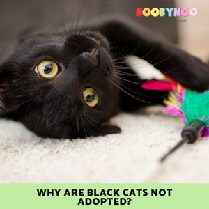 Black Cats, Black Cat appreciation Day, Black Cat Adoption, Adopt dont shop