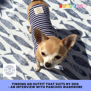 Finding an outfit that suits my dog - An Interview with Panchos wardrobe