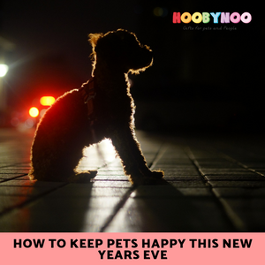 How to Keep Pets Happy this New Years Eve