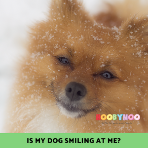 does your dog smile? why do dogs smile? Is a dog smiling a good thing?
