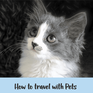 How to travel with pets internationally - with Alison and Meike